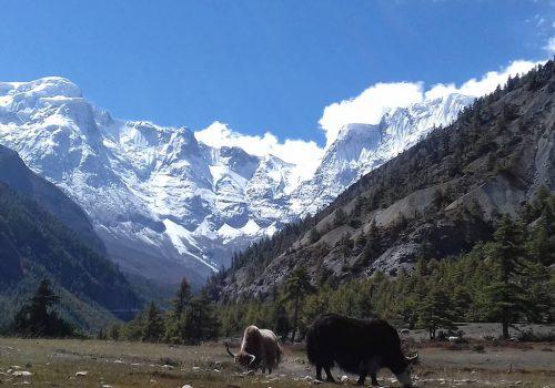 Annapurna circuit trek via Tilicho lake
